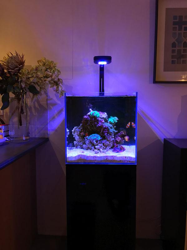 aqua one mini reef 160 review