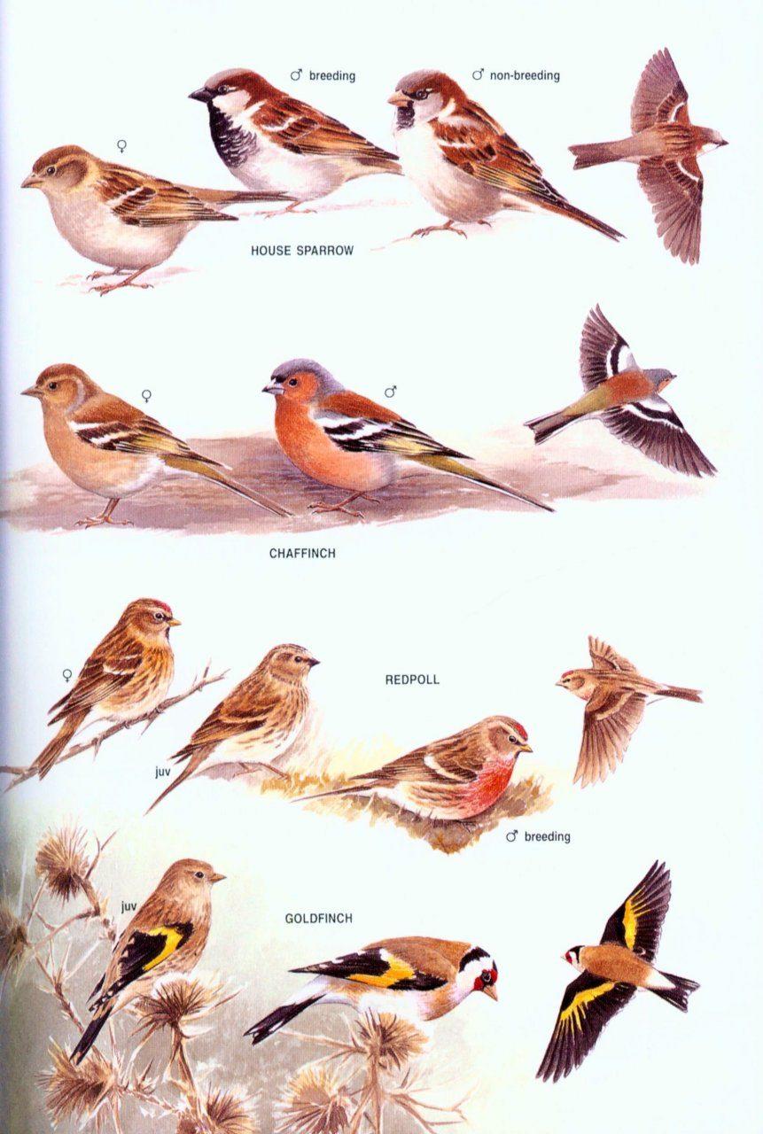 the australian bird guide review