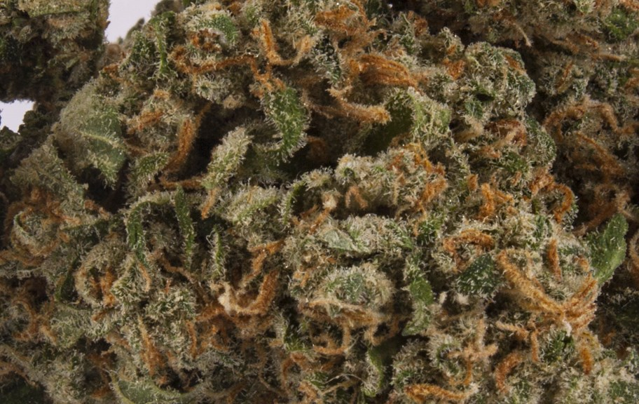 green crack strain review yield