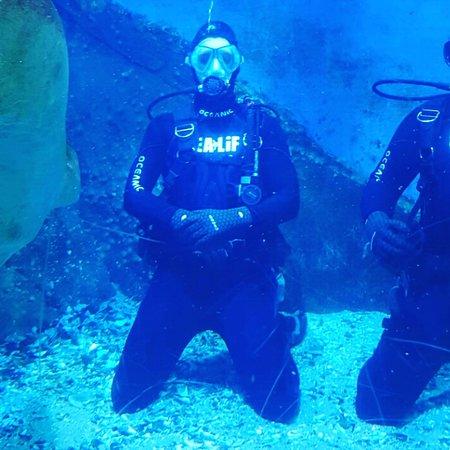 shark dive melbourne aquarium review