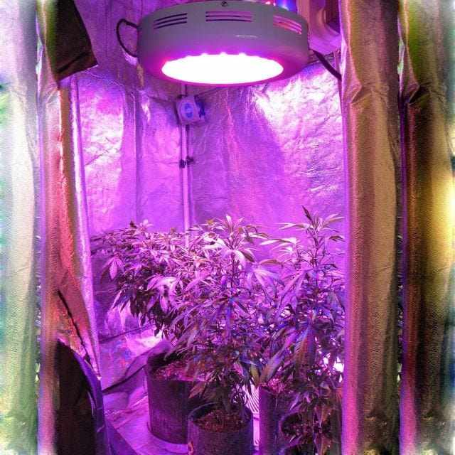 best ufo led grow light review