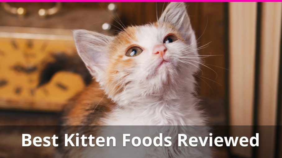 healthy dry cat food reviews